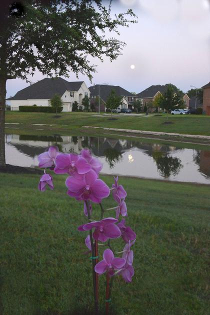 Flower in lens, moon in water